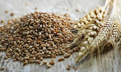 Hạt lúa mạch đen tốt cho sức khoẻ